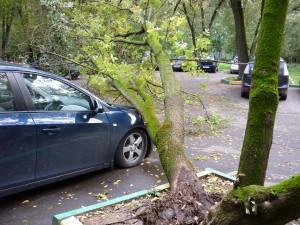 Куда звонить дерево упало на машину забыло свое